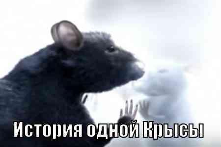 История одной Крысы (9 мин)