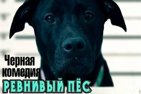Ревнивый пёс (6 мин)